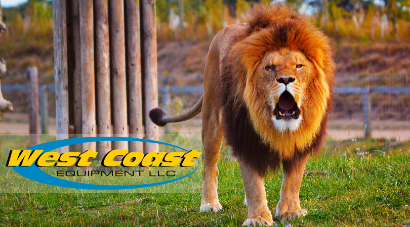Let Us Help You With Your ROAR Annual Reporting